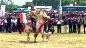 kuda menari