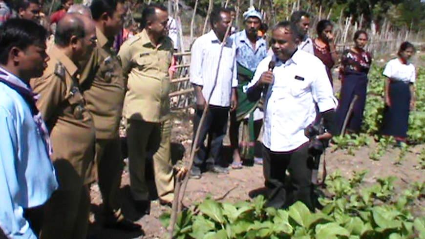 Bupati Panen Sayur Organik