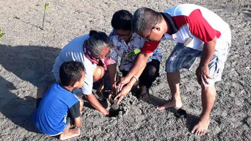 Menanam Anakan Manggrove di Pantai Pada Dita