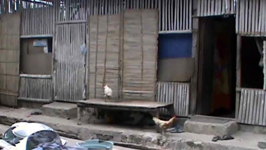Gubuk belas kandang ayam