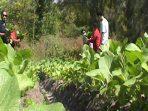 Bertani Sayur